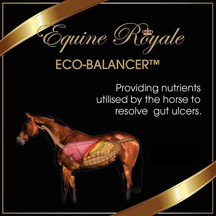 Eco-Balancer - Equine Royale