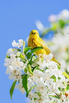 Canary Mix - 20kg