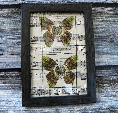 Butterflies & Vintage Music 2