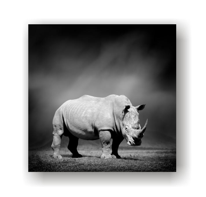 Rhino - Black & White canvas print