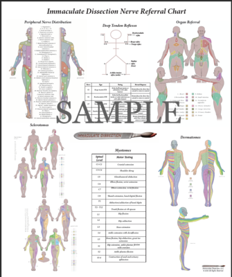 ID Nerve Referral Poster