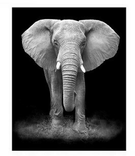 Paint by Numbers Kit Greyscale Elephant 40x50cm