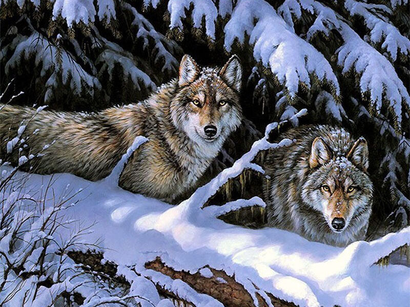 Paint by Numbers Wolves Watching 40 x 50cm