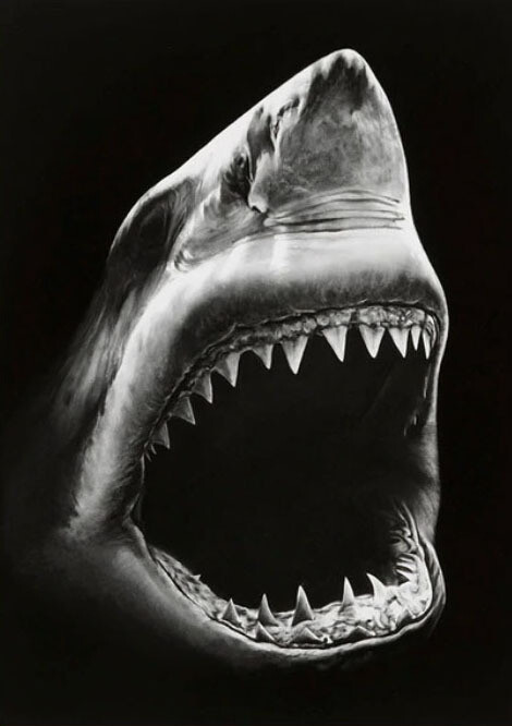 Paint by Number Kit Great White (Greyscale) 40 x 50cm