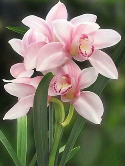 Paint by Diamond Kits Pink Orchids 40 x 50cm