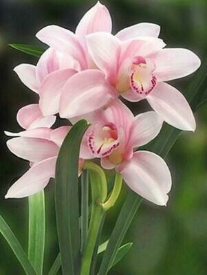 Paint by Diamond Kits Pink Orchids 30 x 40cm