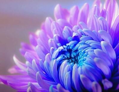 Paint by Diamond Kit Flower Closeup 30 x 40cm