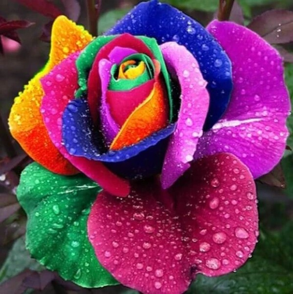 Paint by Diamond Kit Rainbow Rose 40 x 40cm