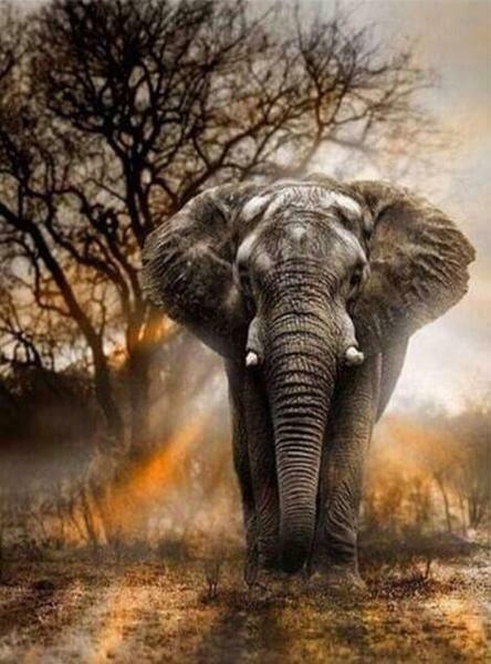 Paint by Diamond Kit Elephant on Patrol 30 x 40cm