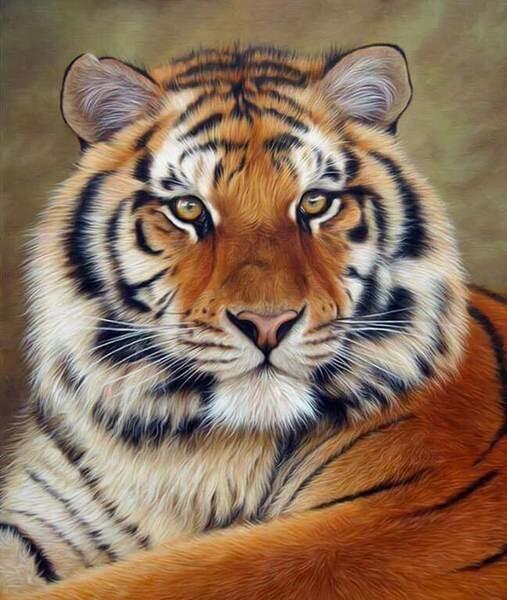 Paint by Diamond Kit Thinking Tiger 30 x 40cm