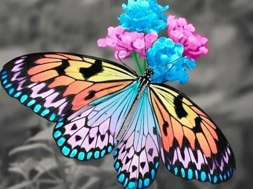 Paint by Diamond Kit Rainbow Butterfly 40 x 50cm