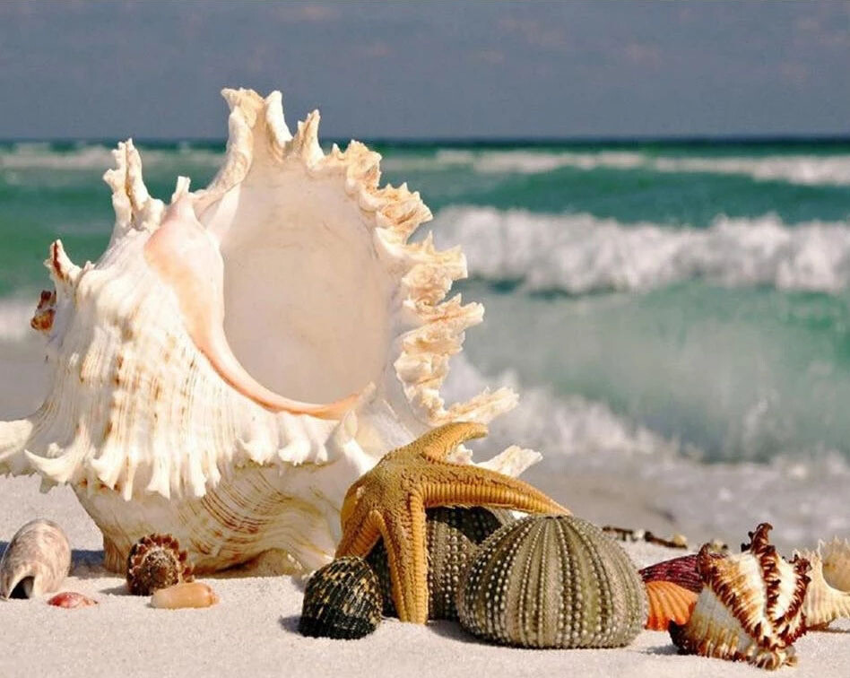 Paint by Diamond Kit Beach With Shells 2 40 x 50cm