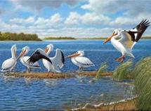 Paint by Diamond Kit Pelcans Meeting 40 x 50cm