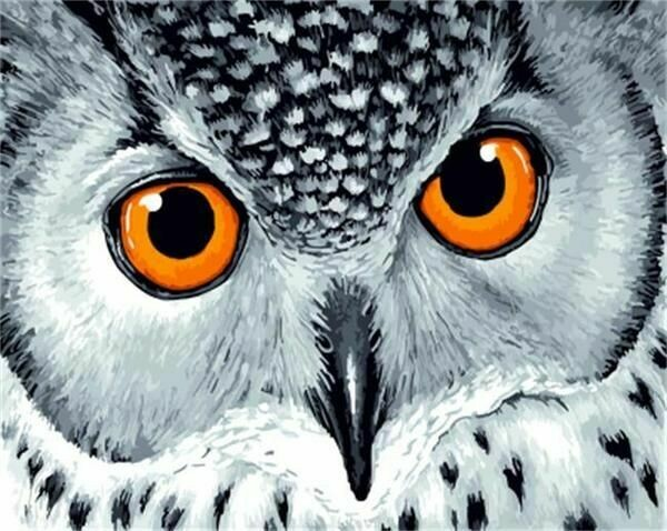Paint by Number Kit Wise Owl 40 x 50cm