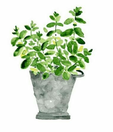 Paint by Number Kit House Plant 40 x 50cm