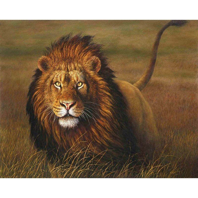Paint by Number Kit King of the Jungle 40 x 50cm