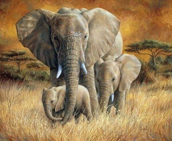 Paint by Number Kit Elephant Family 40 x 50cm