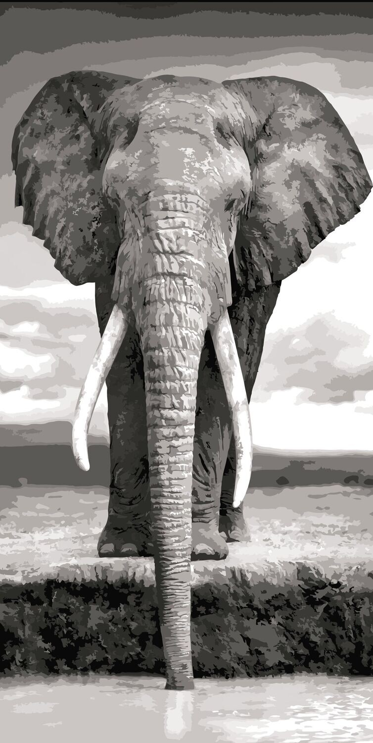 Paint by Number Kit Mono Elephant 40 x 50cm