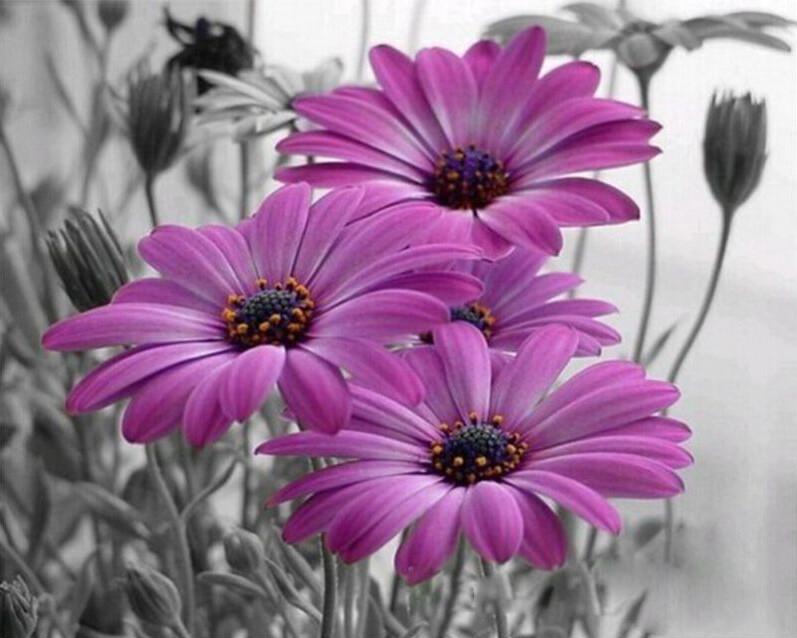 Paint by Number Kit Purple Flowers 40 x 50cm