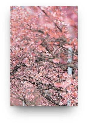 [005] Libreta sakura