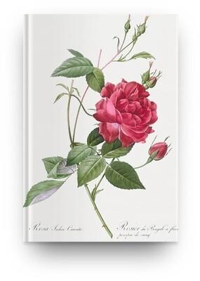 [020] Libreta Pierre-Joseph Redouté Flor 02