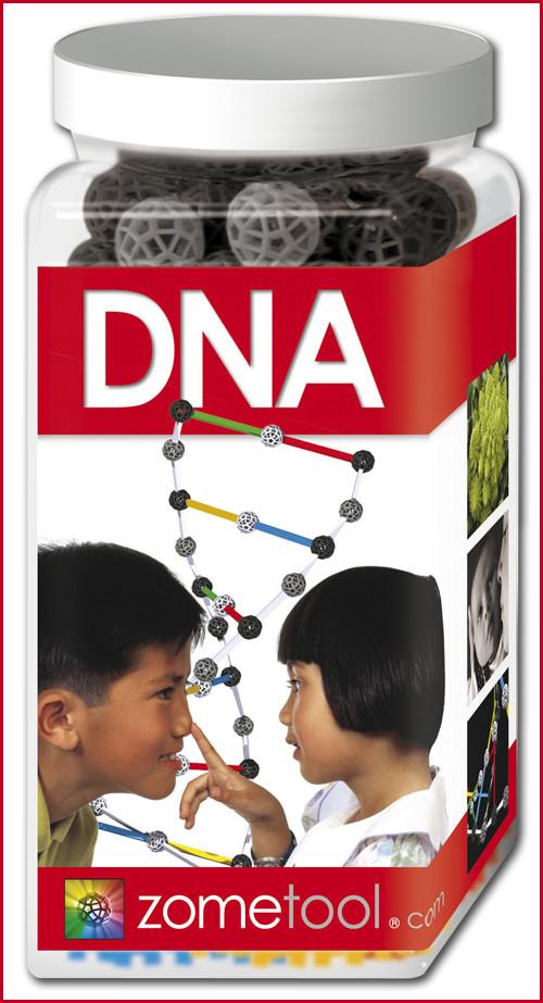 DNA - Biochemie Bausatz