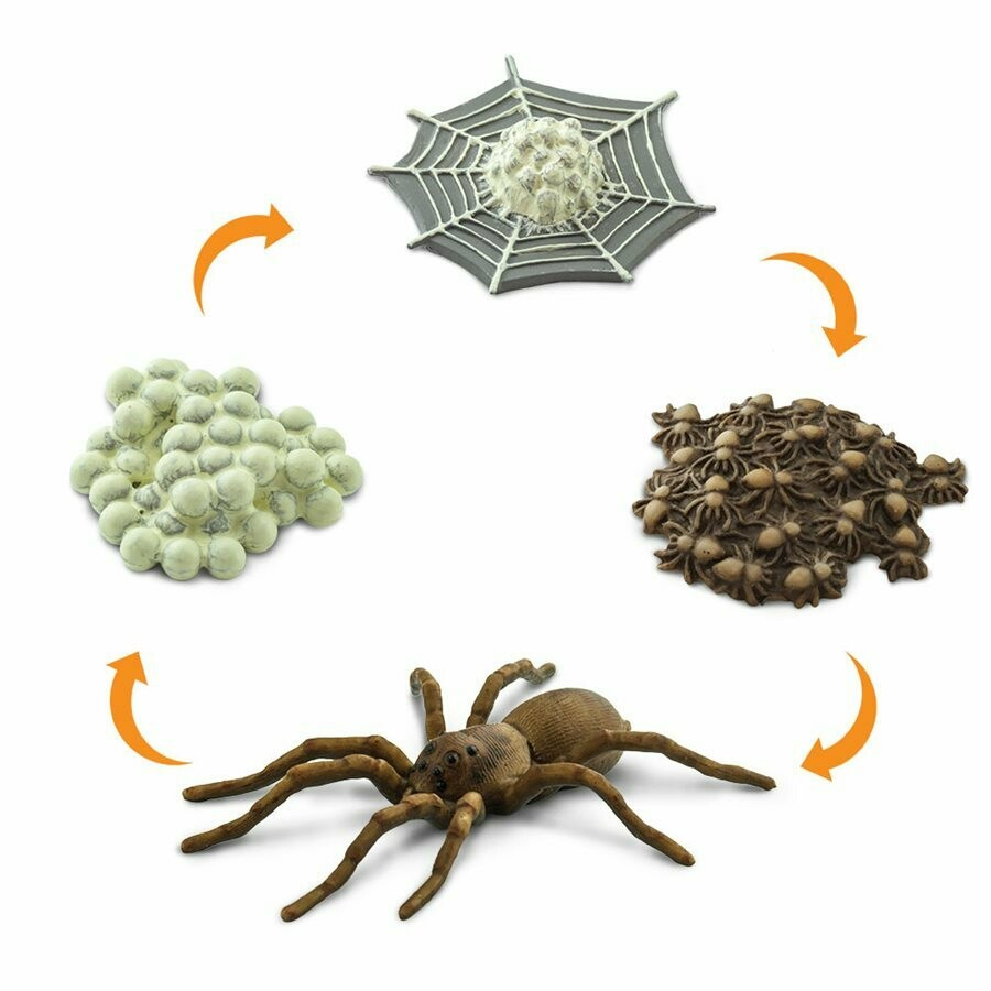 Life Cycle Of A Spider 1-2Inches Miniature Education Toy Set RPG Tabletop