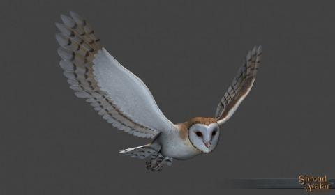 Barn Owl Decoration Pet (Citizen Founder) - Shroud of the Avatar