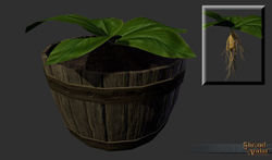 Eternal Mandrake Plant Seed - Shroud of the Avatar