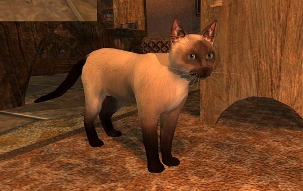 Siamese Cat Decoration Pet - Shroud of the Avatar