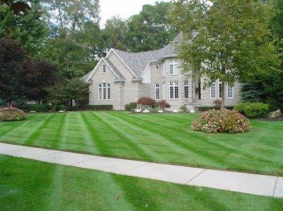 Lawn De-thatching/Power-raking
