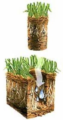 Lawn Core-Aeration