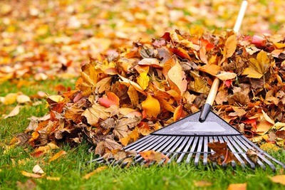 Fall Leaf Clean Up  multi visit service