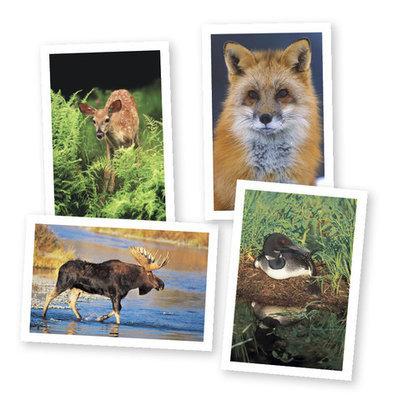 Wildlife Of Vermont