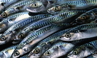Mackerel 3pk