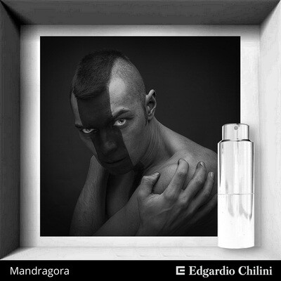 Edgardio Chilini, Mandragora, spicy fragrance