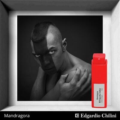 Edgardio Chilini, Mandragora, spicy fragrance
