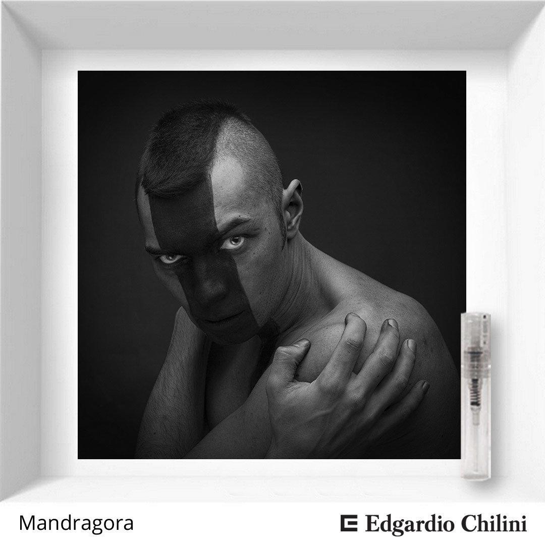 Edgardio Chilini Mandragora sample