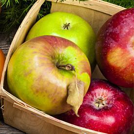 Fruit Selection (no Veg)