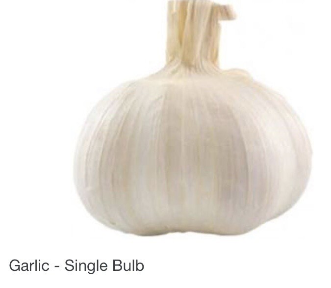 Single Large Garlic Bulb