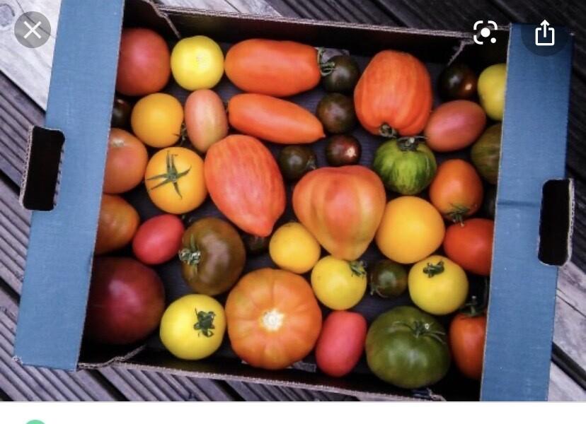 Heritage Tomatoes Per Box