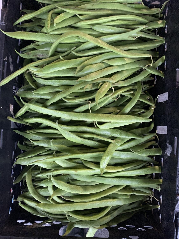 English Green Beans/stick