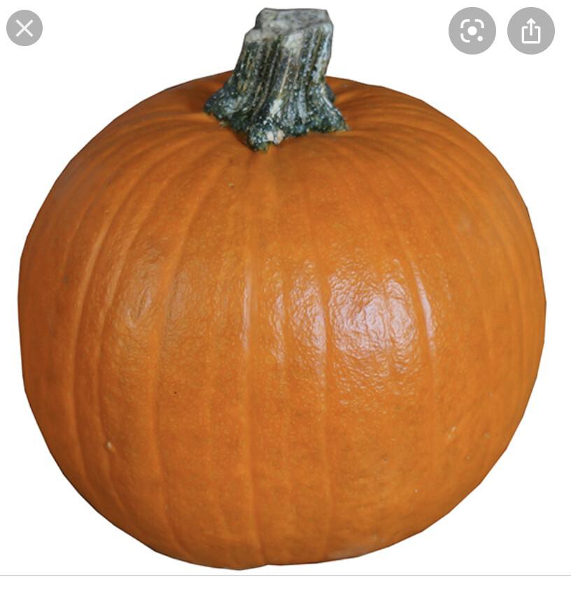 Pumpkin Extra Large