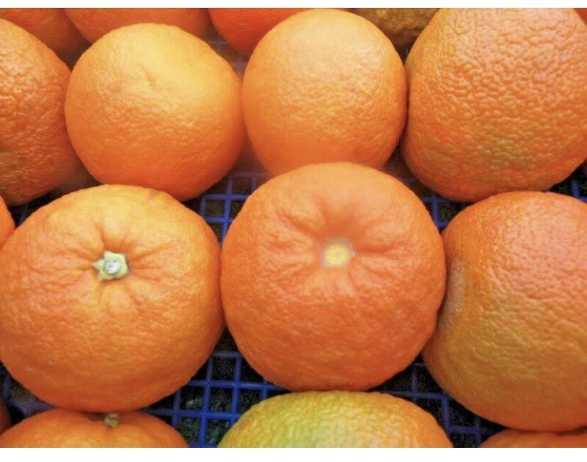 Marmalade Oranges From Seville  £2.00 Per lb