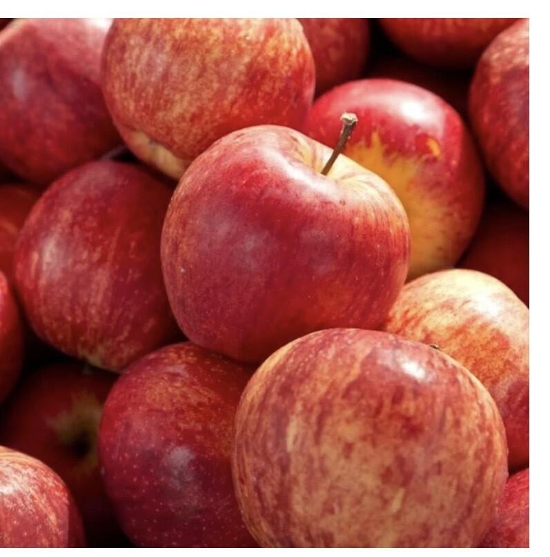 Gala Apples ( 4 )