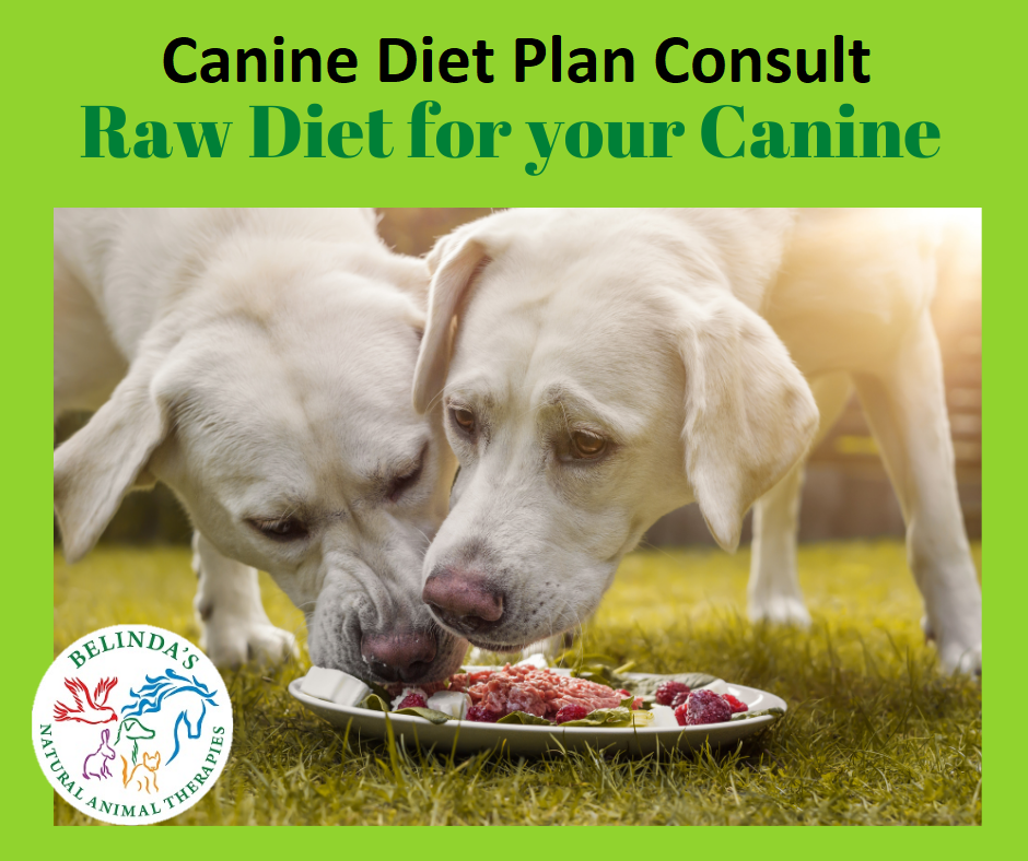Canine Diet Plan Consult
