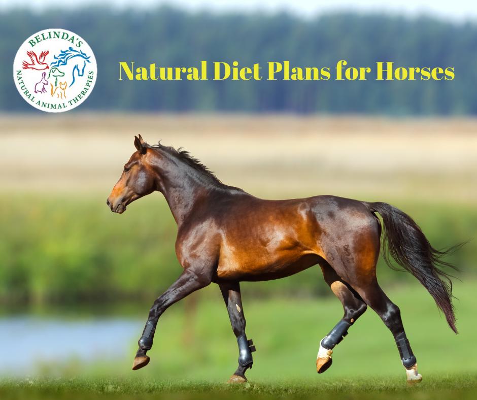 Equine Diet Plan Consult