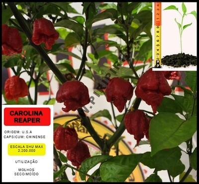 Planta Carolina Reaper
