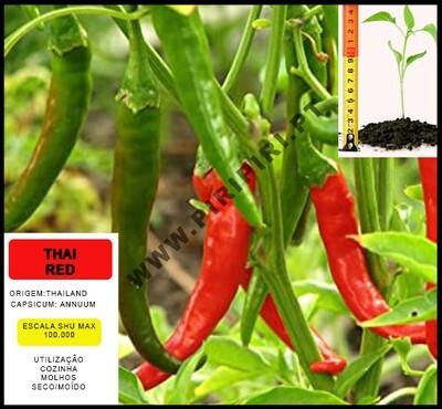 Planta Thai Red