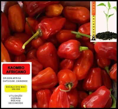 Planta Kaombo Africano